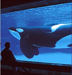 Marineland Attraction
