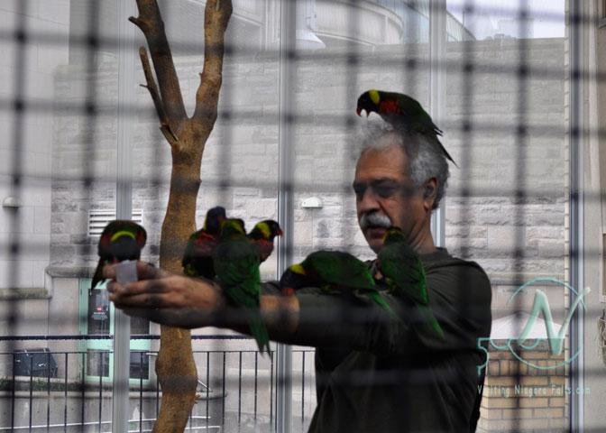 Bird Kingdom - a hungry flock of Lorikeets seem to like me